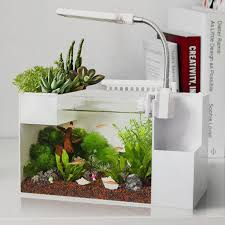 office fish. Cheap Aquarium Tank Backgrounds, Buy Quality Sump Directly From China Breeder Suppliers: Doo Office Fish Goldfish