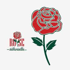 beautiful blooming red rose flower