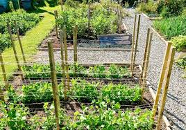 vegetable garden design how to layout