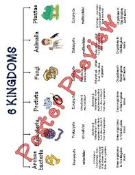 6 Kingdoms Of Life Chart 6 Kingdoms Of Life Characteristics 16x20 Anchor Chart In