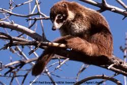 nocturnal desert animals. Wonderful Desert Sonoran Desert Seek And Find For Nocturnal Animals C