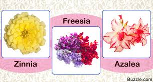 beautiful flowers name with meaning pictures of flowers and names with flowers pictures with names