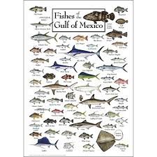 The Of Sports Mexico Amazon Sky amp; Outdoors Poster Water Earth com Gulf Fishes -