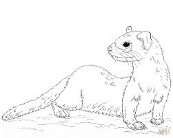 Small Picture Black footed Ferret coloring page Free Printable Coloring Pages