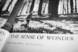 nudging kids into wonder then science phenomena curiously krulwich the opening sp of rachel carson s the sense of wonder