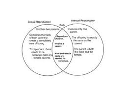 Sexual And Asexual Reproduction Chart The Way The Tigers