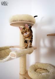 a catwalk for our bengal kitten cat walk diy