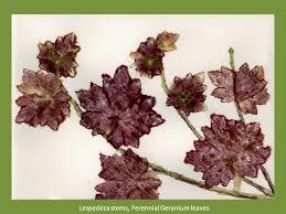 hammered botanical prints 11