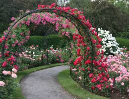 Small Picture Rose garden design ideas