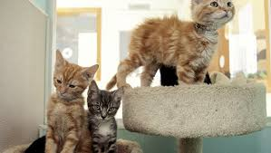 cats in animal shelters. Fine Shelters On Cats In Animal Shelters
