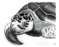 Small Picture 103 best Clip ArtMy Style Turtle Turtle images on Pinterest