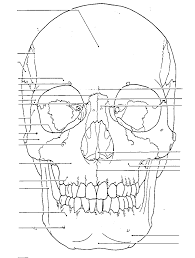 Skull diagram colouring pages bones anatomy coloring on page of human skull labeling worksheet cranium diagram skeleton skull diagram unlabeled on blank