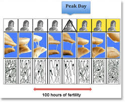 Natural Family Planning Mucus Chart Pin On Families