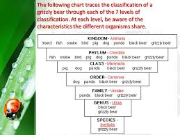 Science Term 4 Biology Organising Organisms Levels Of