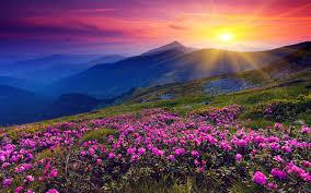Beautiful Flower Landscape 29011