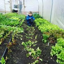Kitchen Garden Hens Ckg Kitchen Garden On Twitter Scraps Being Collected By Our