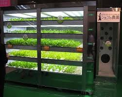 Who Owns Vending Machines Interesting Vending Machine Grows 4848 Heads Of Lettuce A Year Without