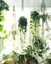 best hanging plants wall