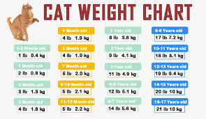 cat weight chart by age in kg ib