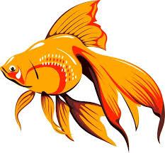 gold fish clip art. Wonderful Clip Golden Fish Clip Art On Gold Clip Art T