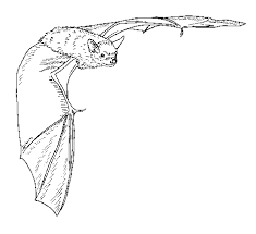 Small Picture DEEP Big Brown Bat Coloring Page