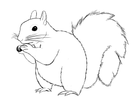 Small Picture How To Draw A Squirrel Squirrel Drawings and Doodles
