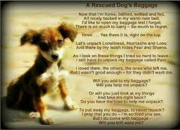 Rescue Dog Quotes Interesting Quotes About Shelter Dogs On QuotesTopics