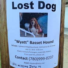 how to make lost dog flyers 20 steps to take if you lose your pup barkpost