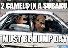 Image result for Humpty hump