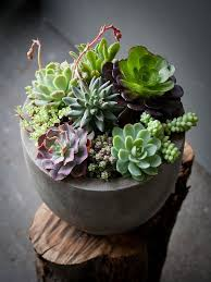 this site has some gorgeously creative ideas for indoor succulents - Lila B  Design Perfect for