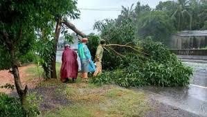 77 tàu thuyền bị đứt neo trôi dạt vào cảng Quy Nhơn do bão số 5