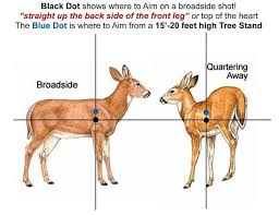 Deer Vitals Chart How To Find And Aim For Deer Vitals