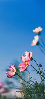 Iphone Xs Max Wallpaper Flowers