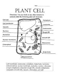 Small Picture Animal And Plant Cell Diagrams To Label diagram gallery Wiring