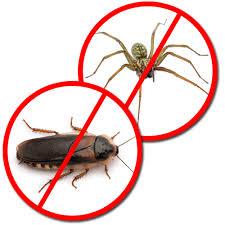 Pest Control, Termite Extermination & Rodent Removal - Killum Pest Control