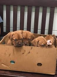 if every day started with a box of puppies my