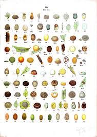 Insect Eggs Die Raupen Der Gross Schmetterlinge Europas
