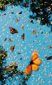 High quality monarch butterfly aesthetic gifts and merchandise. Aesthetic Monarch Butterfly Wallpaper