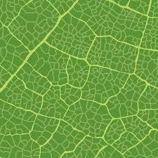 textura verde textura da folha verde baixar vector