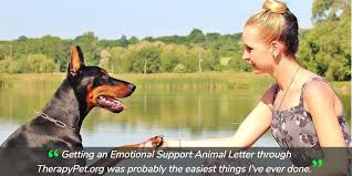 How To Get A Doctors Note For An Emotional Support Dog How To Get An Emotional Support Animal Dog In 2019 Therapy Pet
