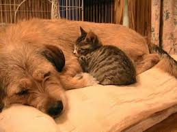 dog and cat sleeping together. Perfect Sleeping Bed Buddies 20 Pics Of Dogs And Cats Sleeping Together  12 Pelfind To Dog Cat A