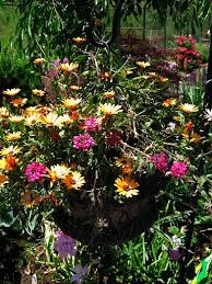 Small Picture Container Gardening Ideas For Full Sun decorating clear