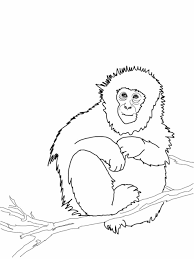 Small Picture Proboscis Monkey Coloring Monkey Coloring Page Free Printable