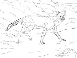 dhole animal coloring pages