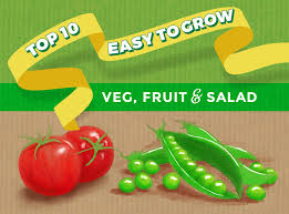 top 10 easy to grow vegetable fruit salad seeds and plants for beginners