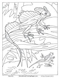 Small Picture lizard coloring pages lizard colouring pages Coloring pages