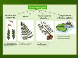Venn Diagram Of Vascular And Nonvascular Plants Plant Phyla