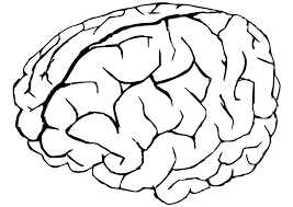 Small Picture Fresh Brain Coloring Page 57 For Download Coloring Pages with