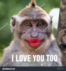 Funny Monkey Quotes