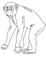 Small Picture Coloring Pages Animals Coloring Chimpanzee Mammal Coloring